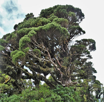 Die speziellen Bäume....