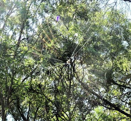 Seht ihr das Spinnennetz?