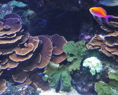 ...der Unterwasserwelt.