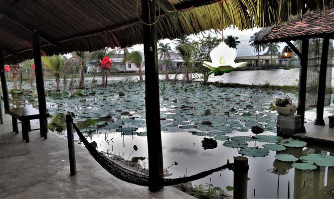 ......bei einem Lotus Blumen Teich.