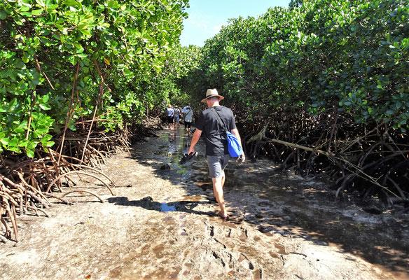 Auch durch den Mangrovenwald.....