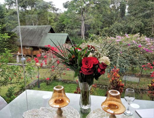 .....dem Blick in den Garten.