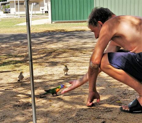 Papageifütterung in Hughenden.