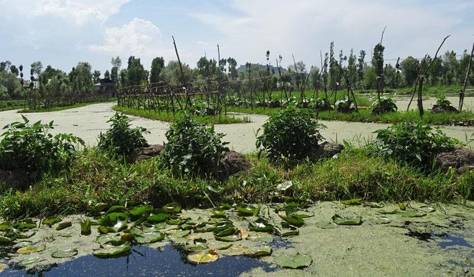Die schwimmenden Gärten..