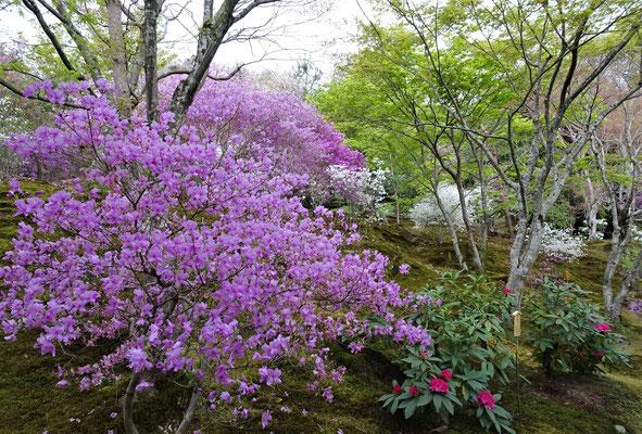 ....dem fantastischen Garten.....