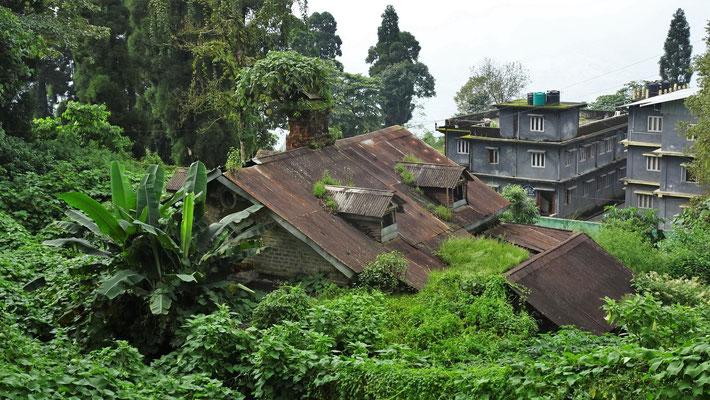 Überwuchertes Gebäude