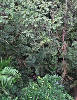 ......durch den Dschungel.