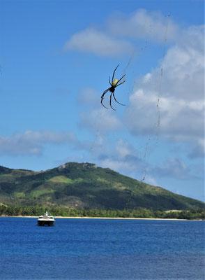Eine grosse Spinne.....