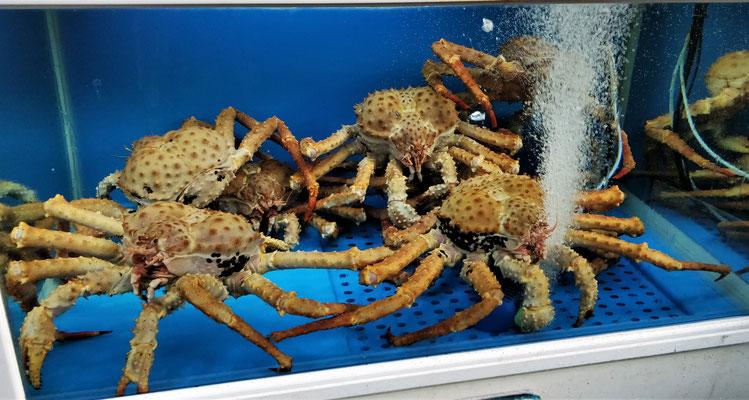 .....von Meeresfrüchten....