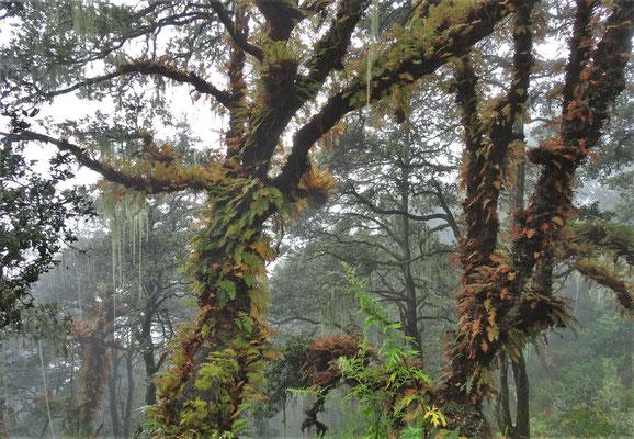...und Waldgebiet über...