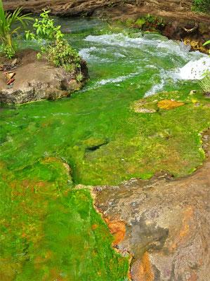 Nicht das Wasser ist Grün sondern....