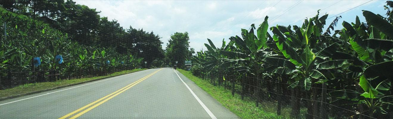 Auf der Ruta del Banano.