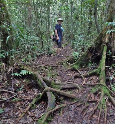 Der Spaziergang durch den Dschungel.