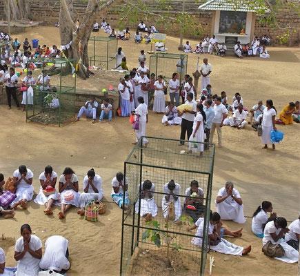 Die betenden Pilger um den Bodhi Baum.