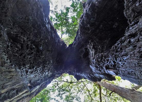 .....das Bauminnere.....