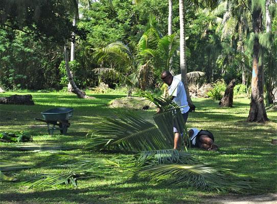 Palmblätter werden zugeschnitten.