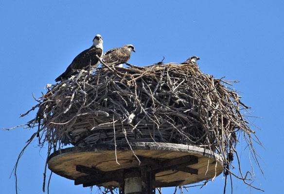 Dieses Nest....