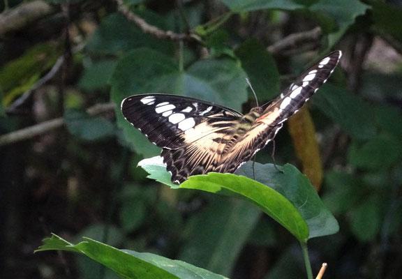 Besuch einer Schmetterlingsfarm.