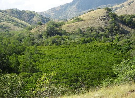Der Mangrovenwald von Oben...