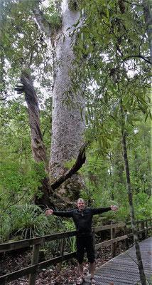.....Kauri Bäume.