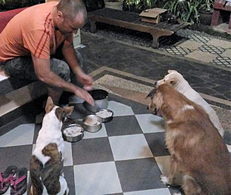 Fütterung der Hauswächter.