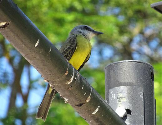 Schöne Vögel.