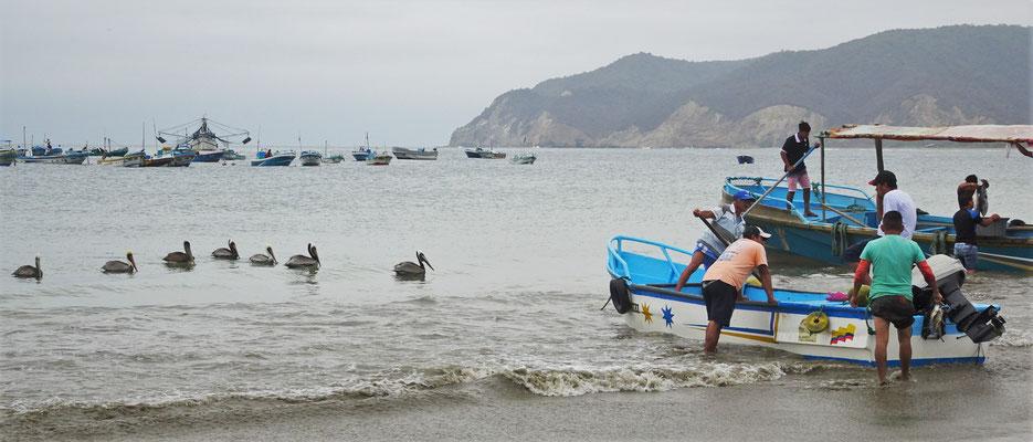 Der Fang wird an den Strand gebracht.....