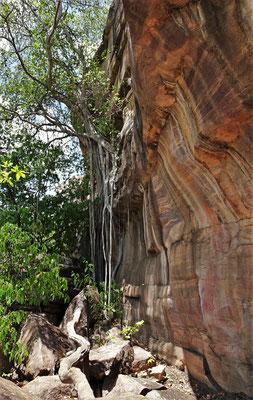 Ein Baum der aus dem Felsen wächst.