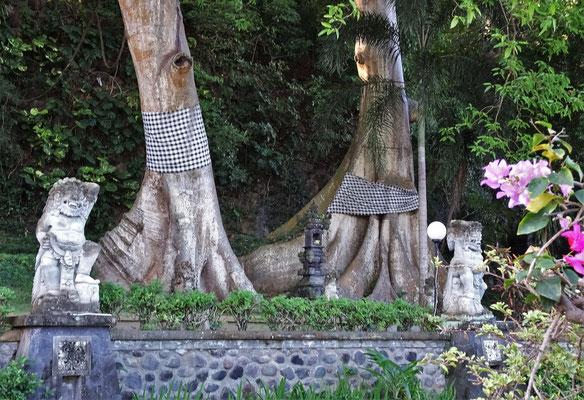 Auch die Bäume werden mit den Tempeltücher geschmückt.