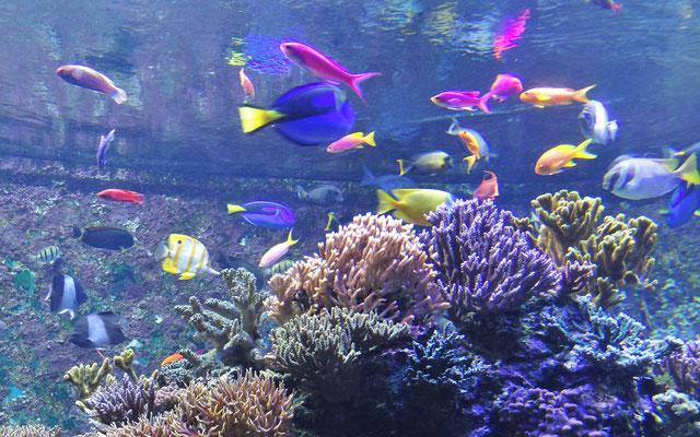 Die fantastische Farbenvielfalt.....