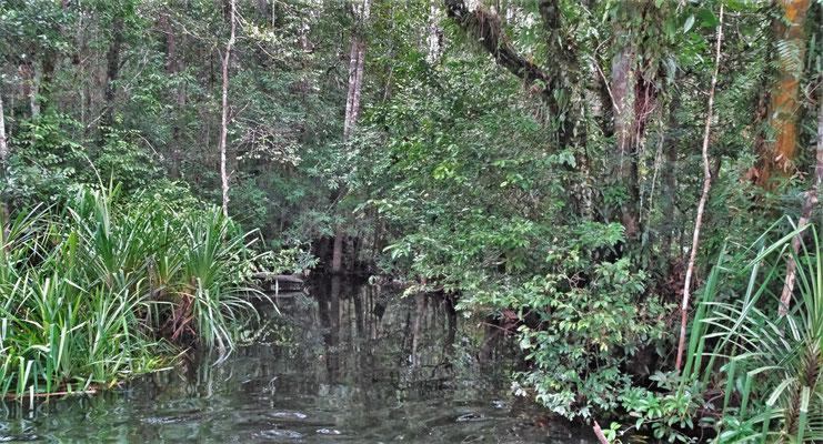 Ein Blick in den Dschungel.