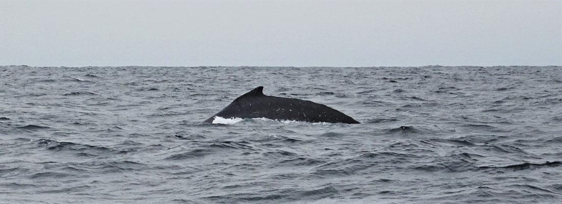 Diese Gruppe Wale.....