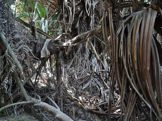 ...werdende Dschungel...