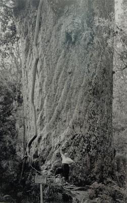 Da durfte man noch beim Baum stehen.