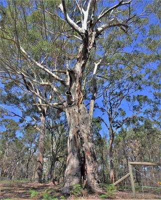 In diesem Baum steht Ugo