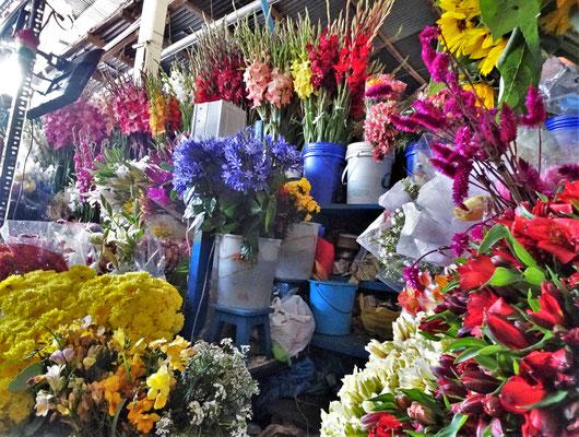 Die Blumenpracht.