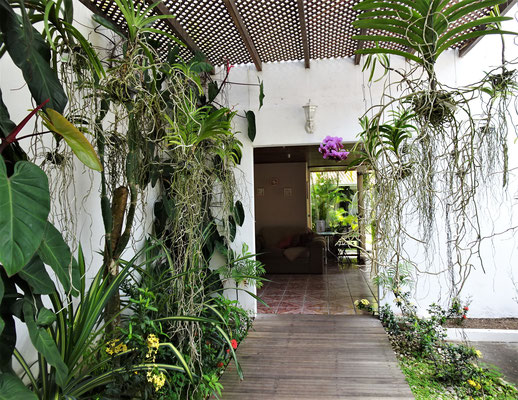 Viele Orchideen.....