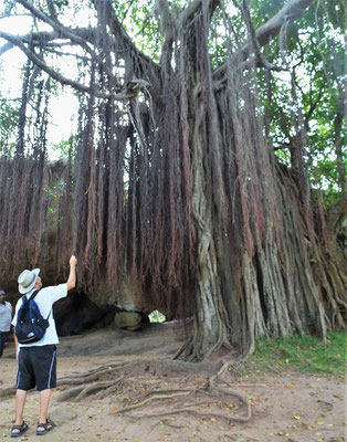 Dieser grosse Baum steht vor....