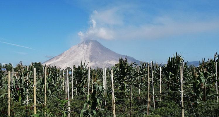...der Vulkan Sanabung...