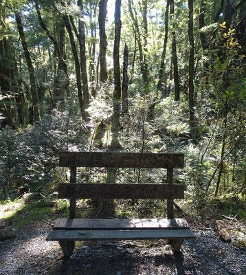 Der Wald in dieser Gegend.