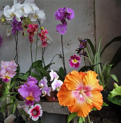 ....Blumenladen entdeckten wir.