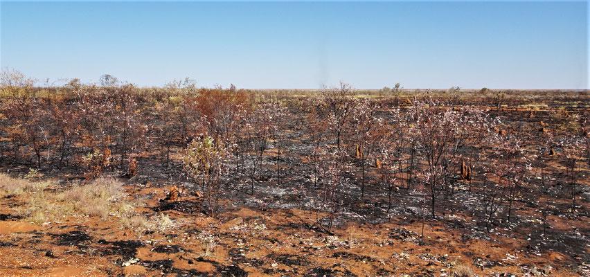 Grosse Brandflächen unterwegs