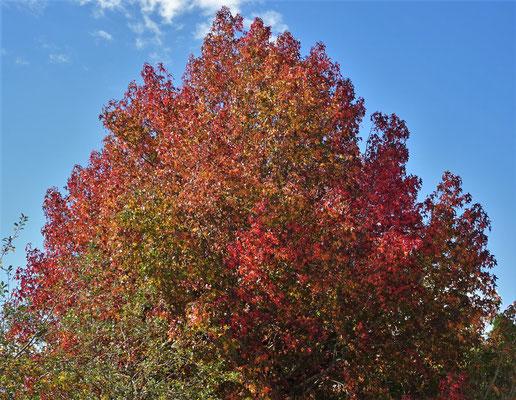 Wunderbare Herbststimmung----