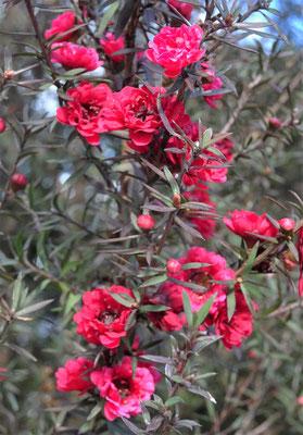 Blumenpracht....trotz Dauerregen.