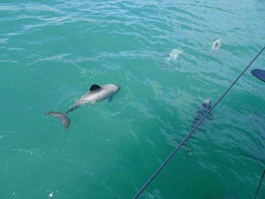 .....die Delfine angezogen.