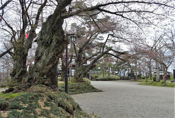 .....in Akita.