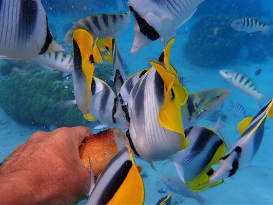 .....erhalten die Fische wieder Brot.