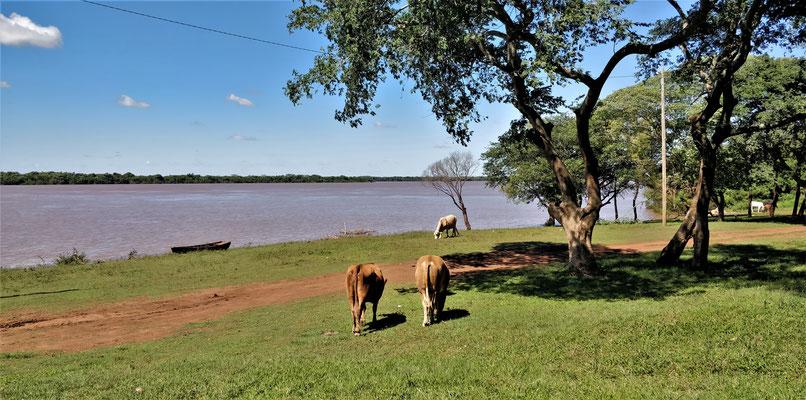 Der Grenzfluss Rio Uruguay, wobei.....