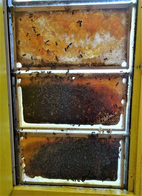 .....die Bienen gezeigt und....