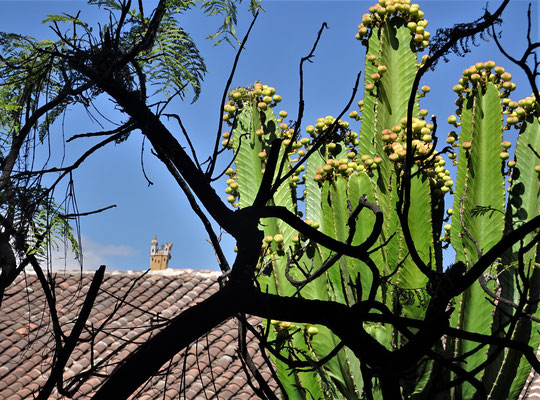 Dieser Kaktus steht im Kulturzentrum....